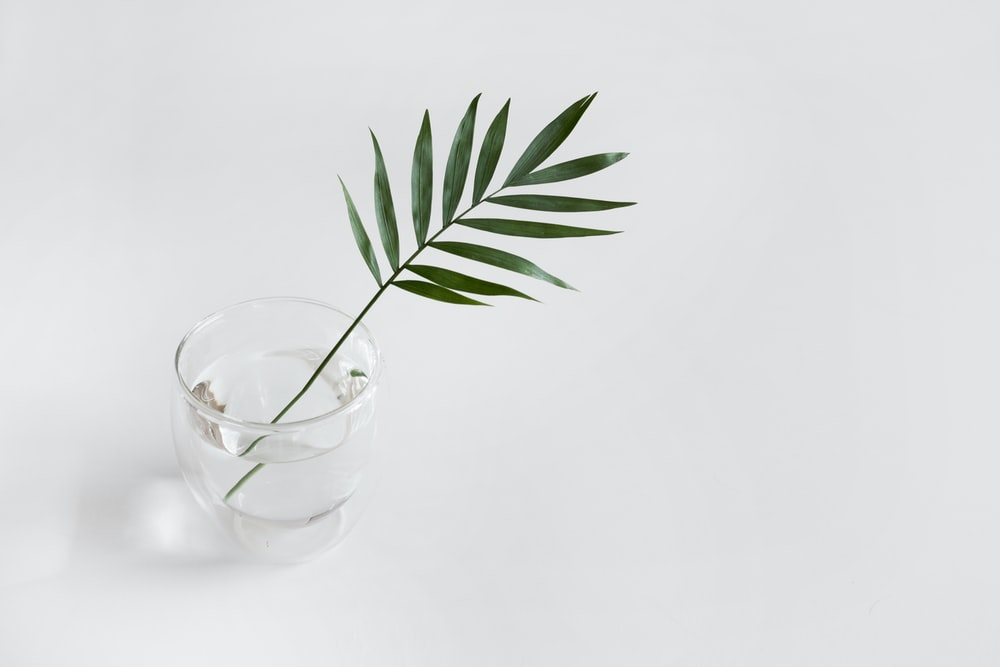green linear plant in clear drinking glass