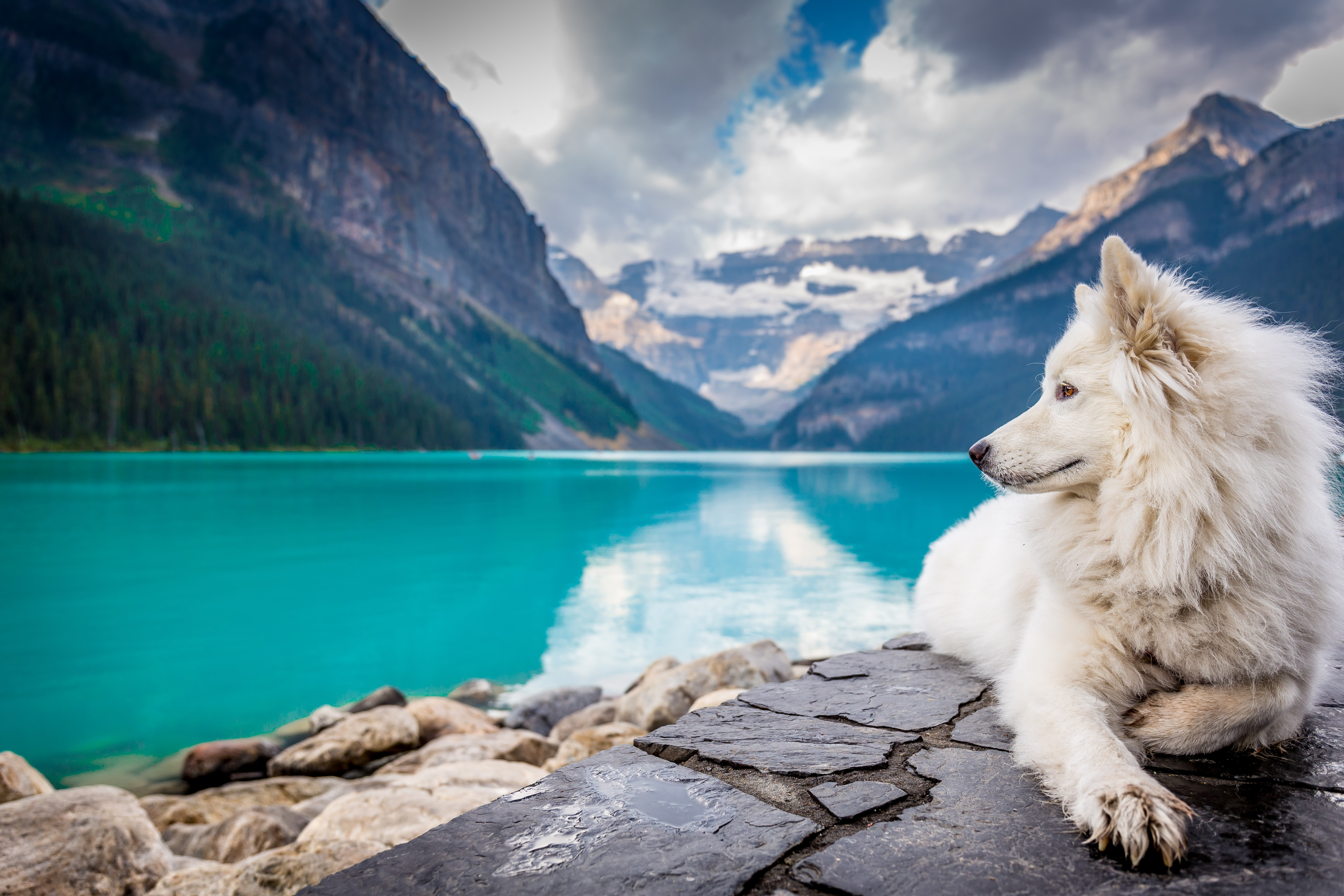 A white dog sitting on a rock formation near a large mountain pond.
