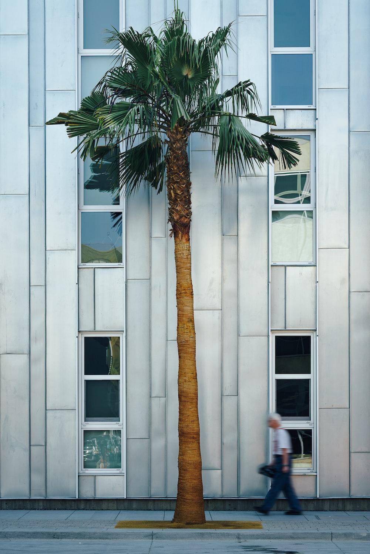 man near palm tree