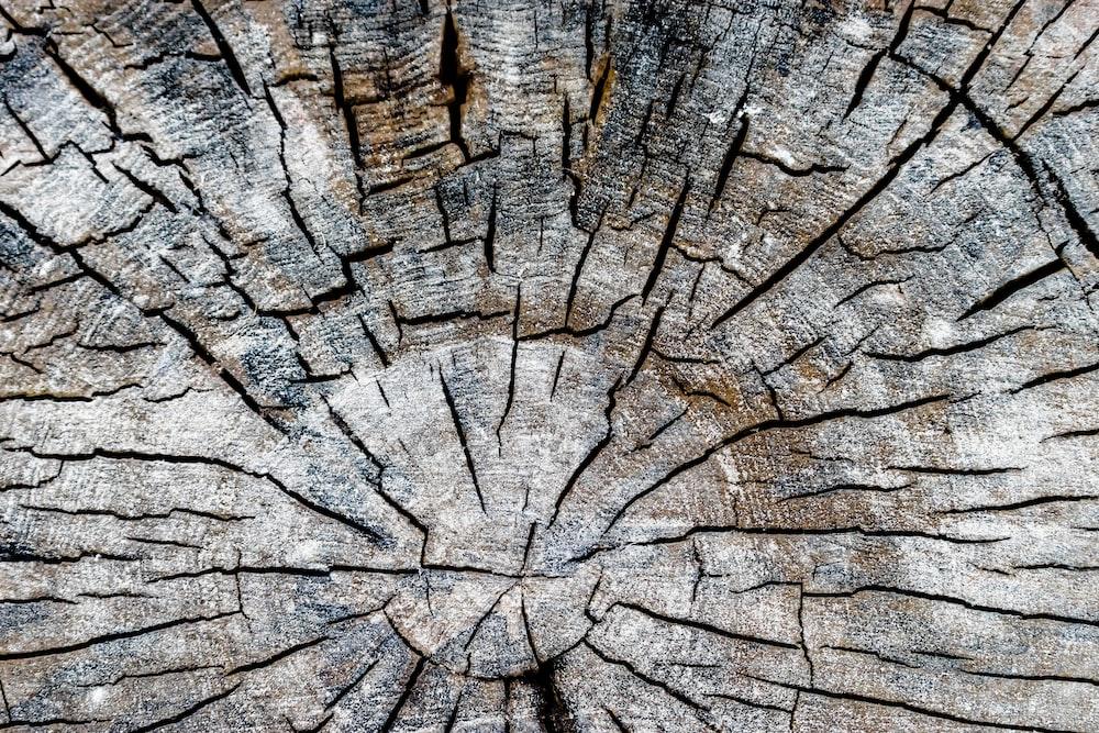 brown wood log
