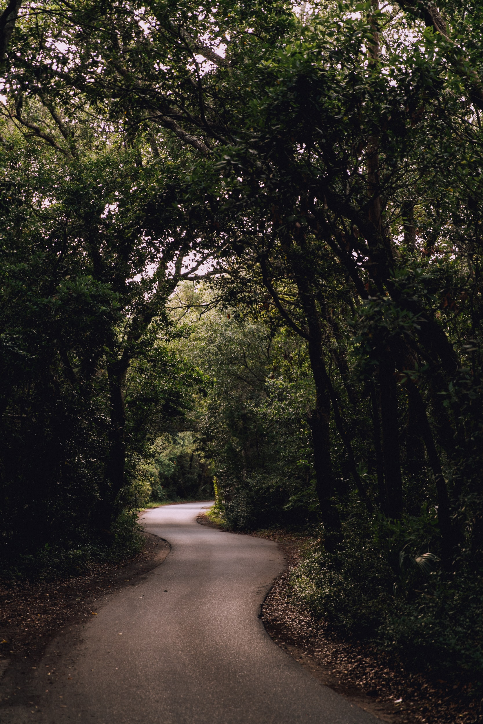 road surrounded with green trees