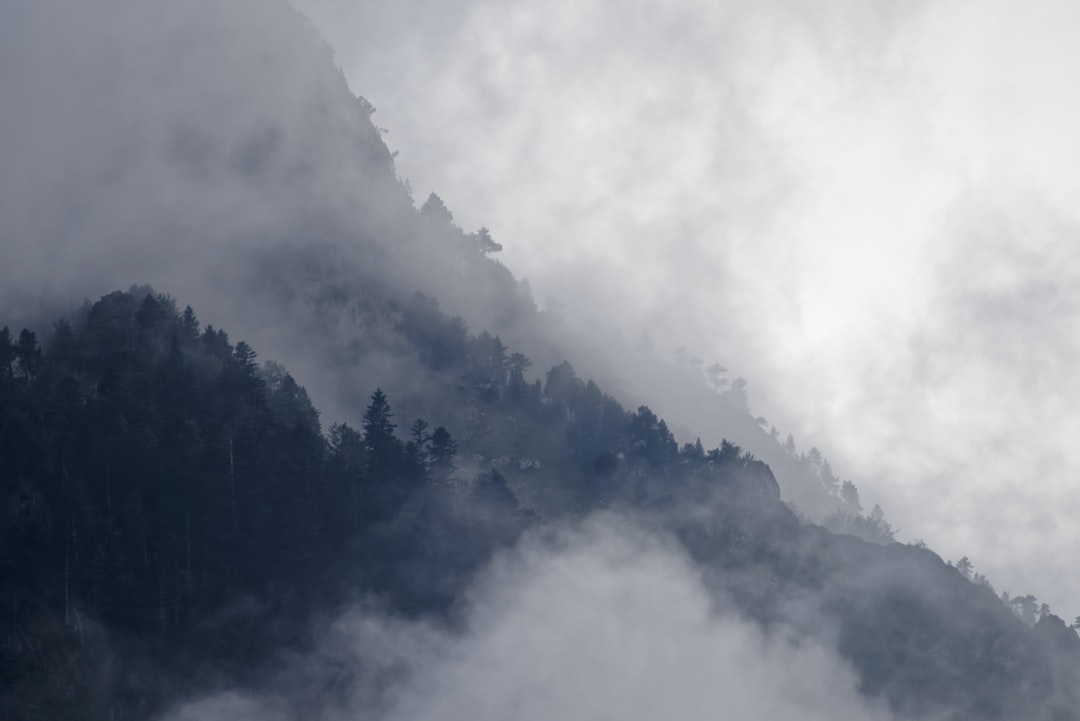 Cloudy forest mountain