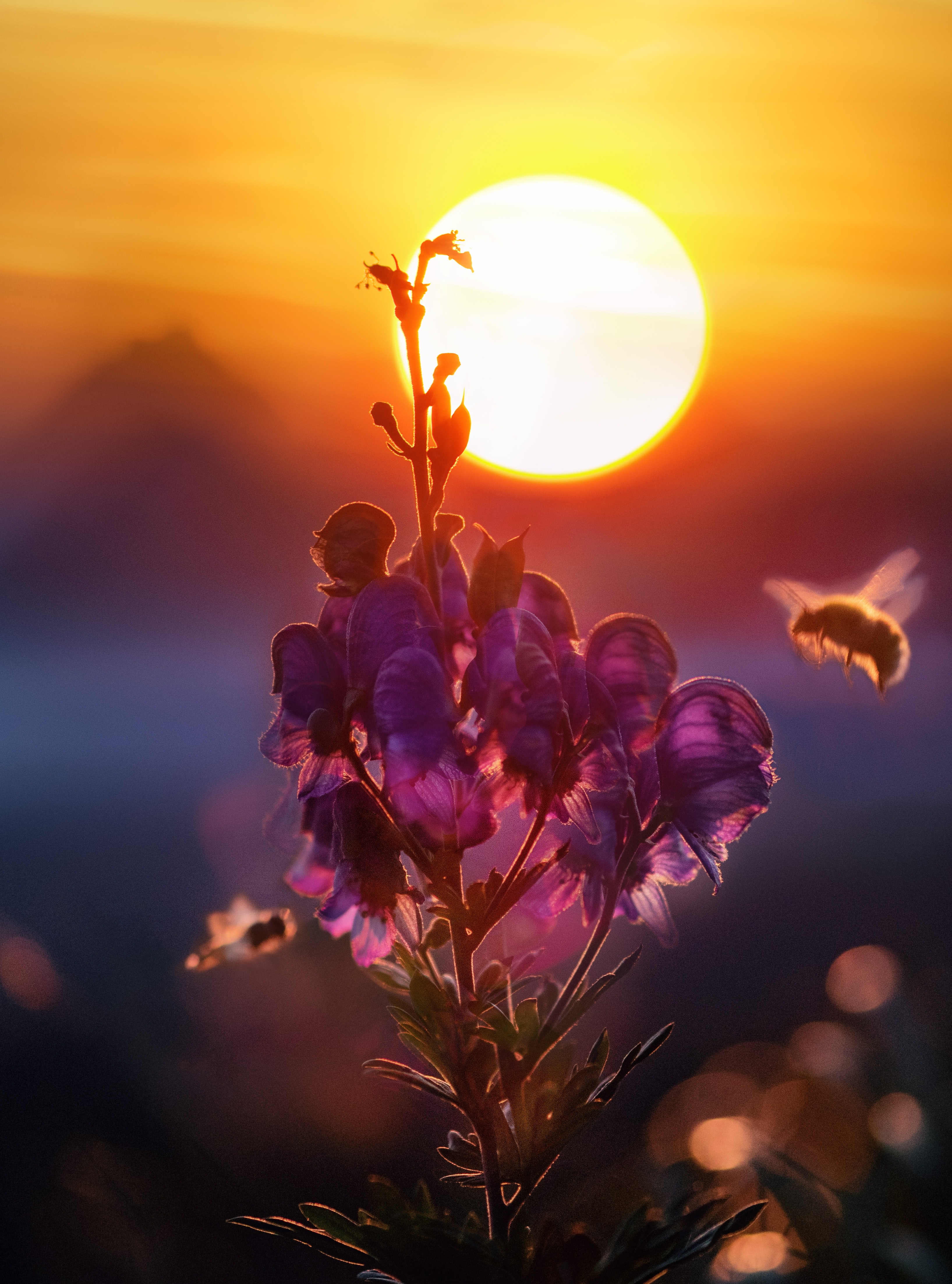 Purple flowers with a bright sunset in the background.