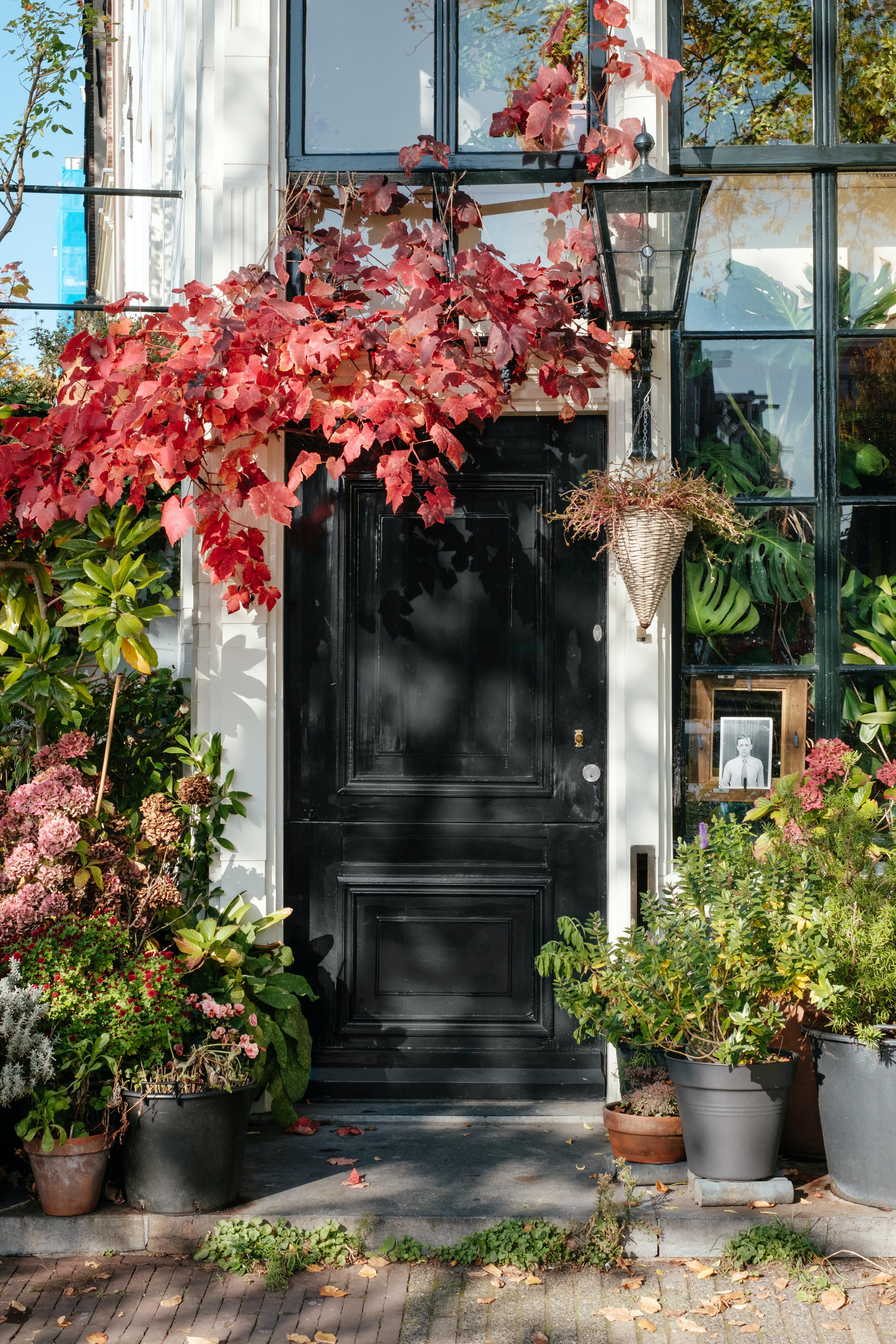 black wooden door surrounded by plants in vases