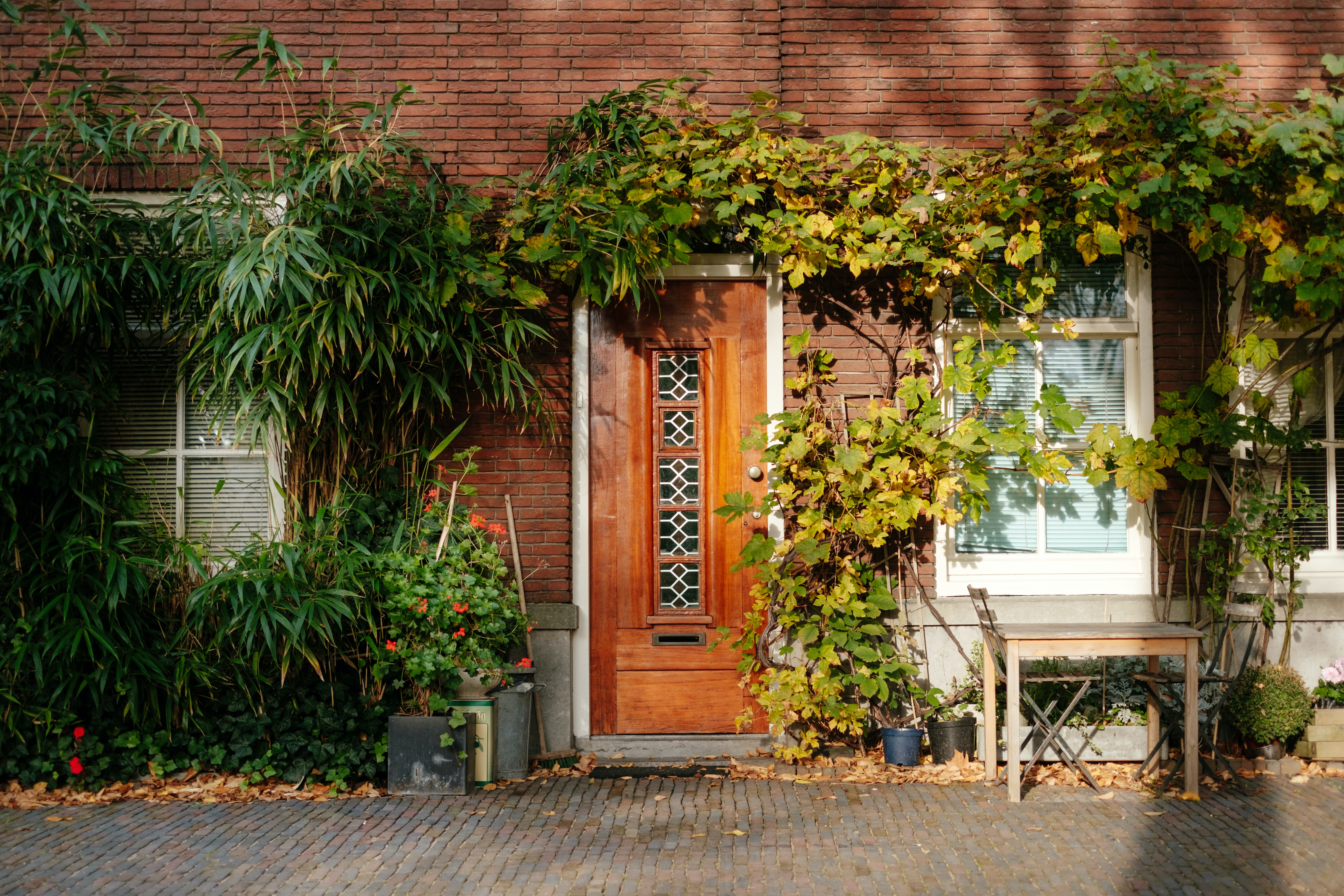 closed brown wooden door with green vine plants at daytime