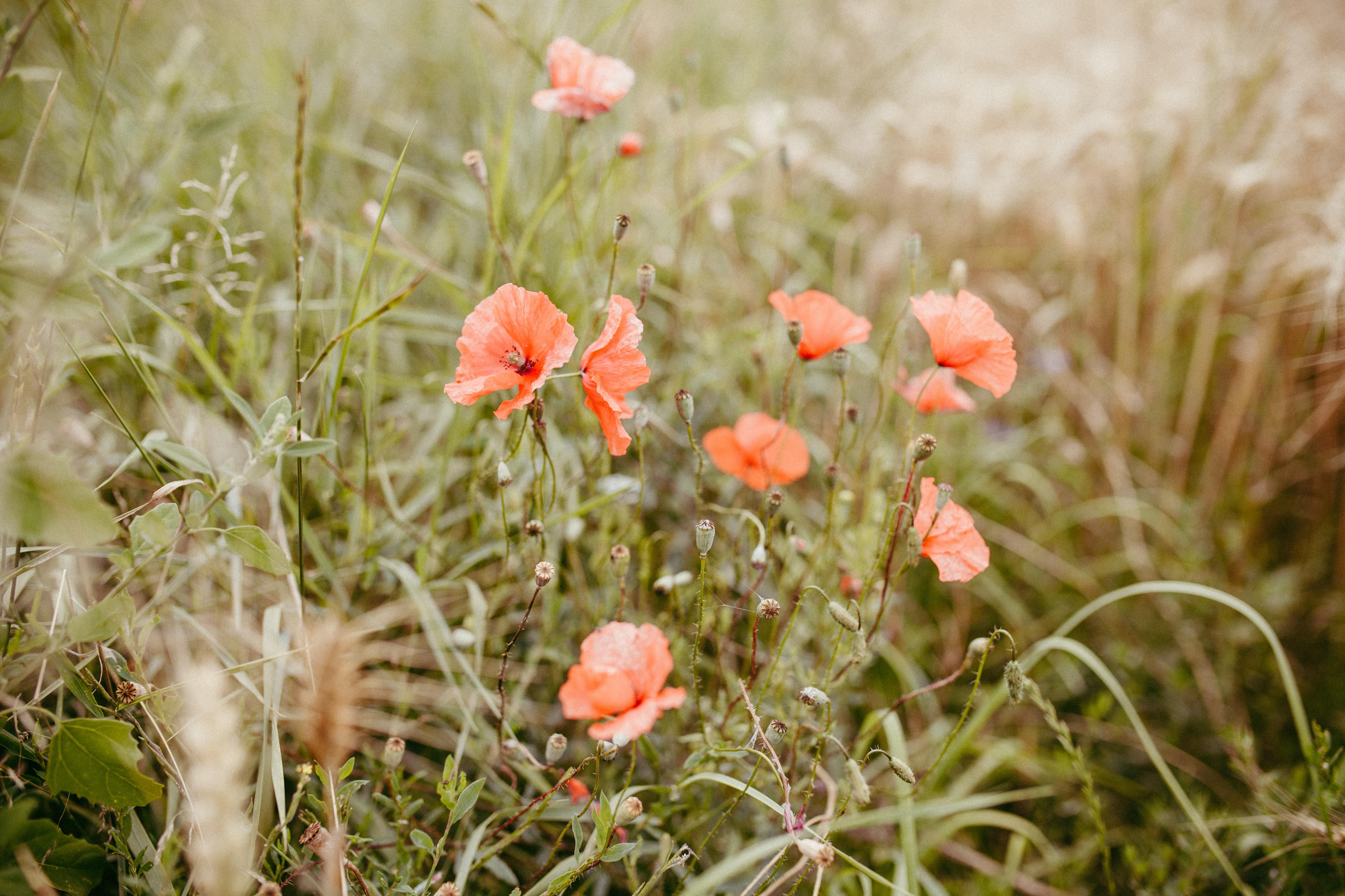 closeup photo of red flowers