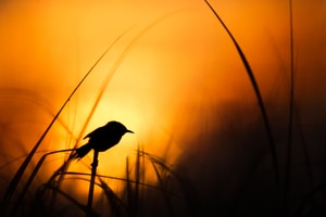 silhouette of bird