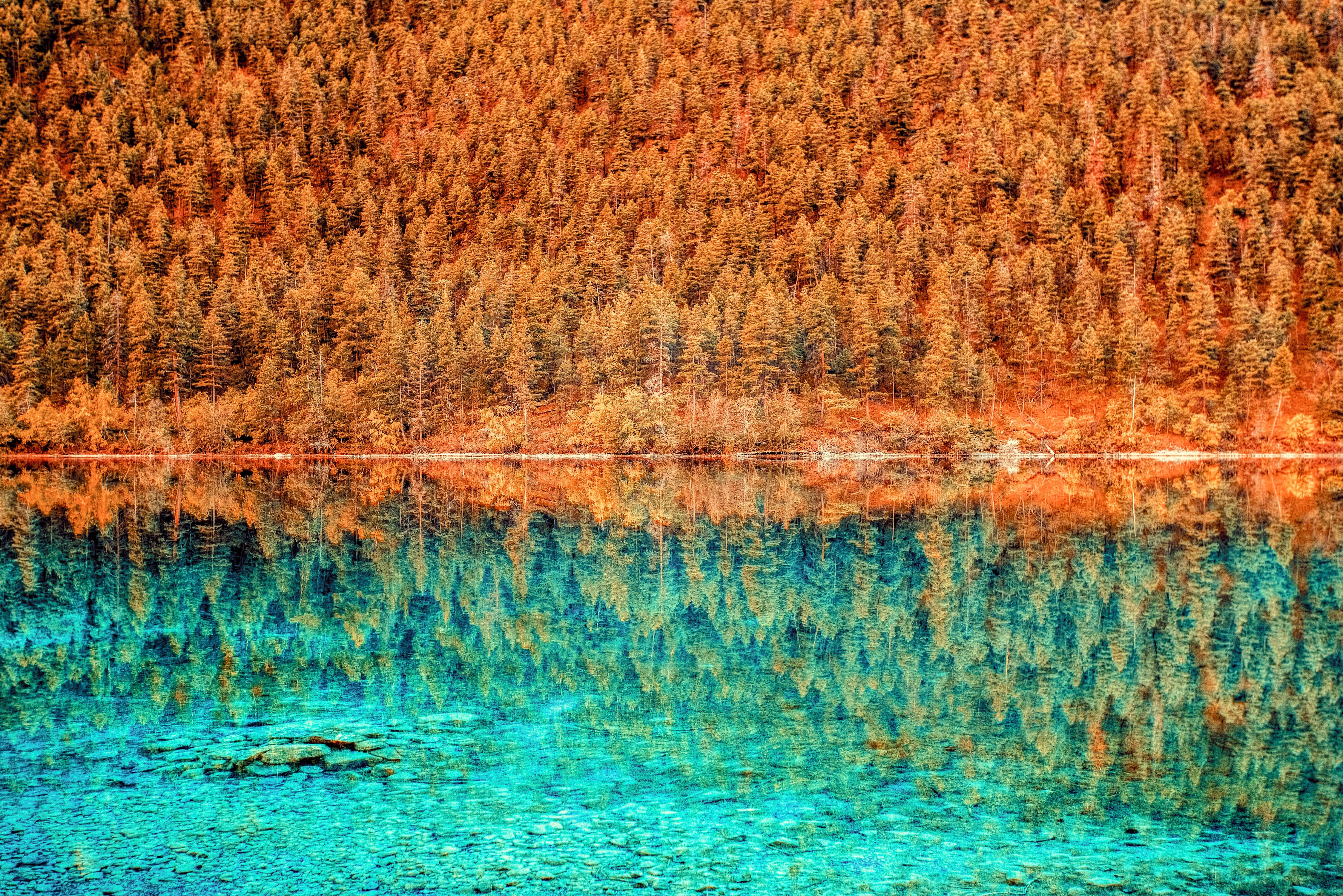 Orange forest reflecting as blue trees in the water.