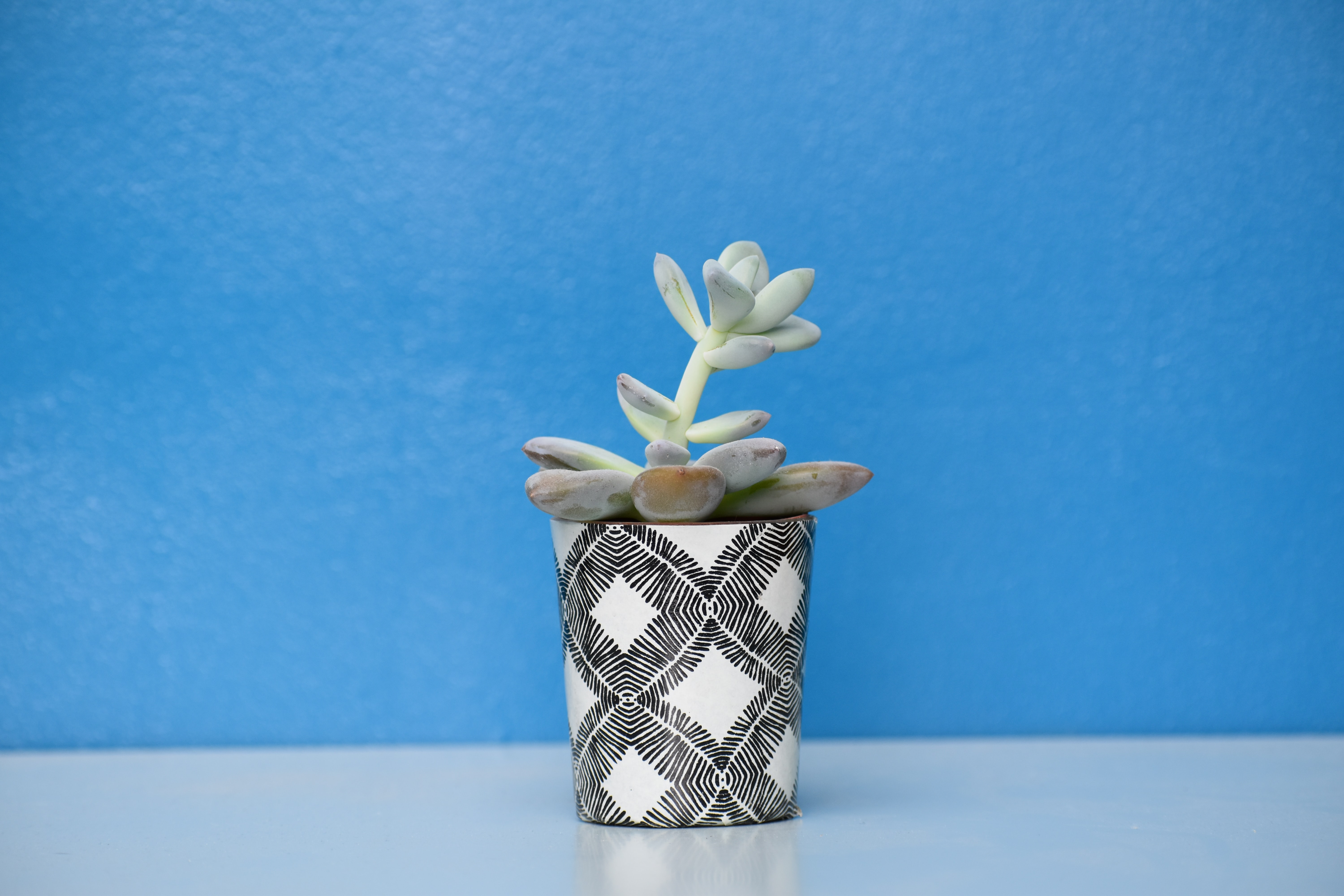 green succulent plant on black and white pot