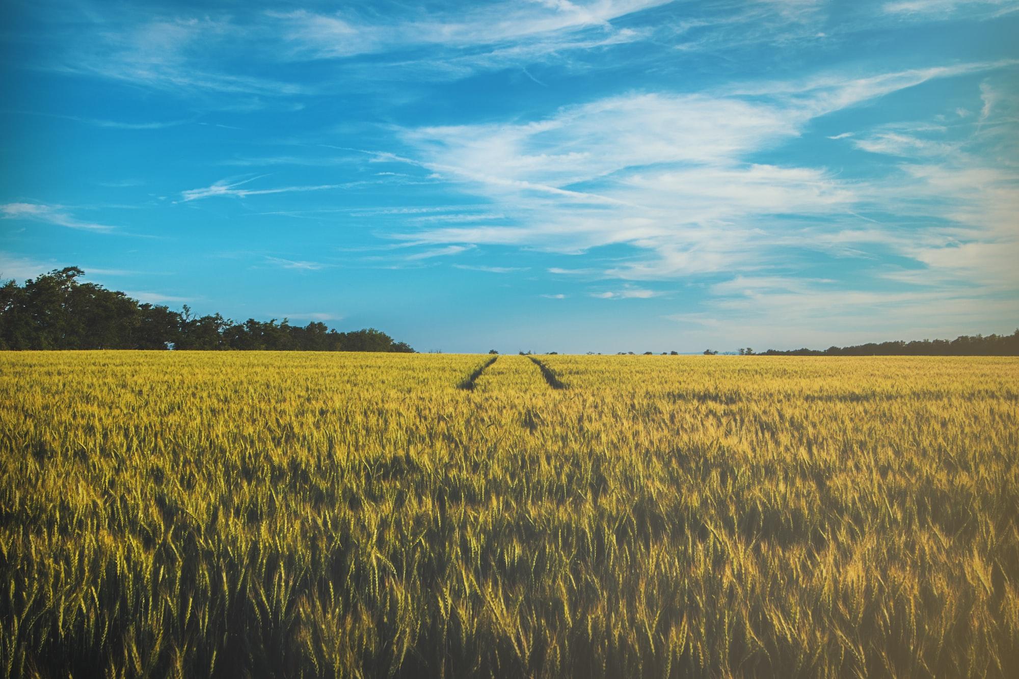 Zapytanie nr 2116 do ministra rolnictwa i rozwoju wsi w sprawie udostępnienia rekomendacji europejskiego komisarza ds. rolnictwa i rozwoju wsi Janusza Wojciechowskiego dotyczących tworzenia krajowych planów strategicznych