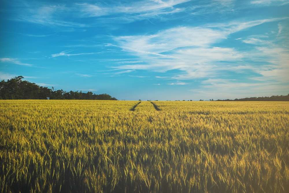 landscape photography of grass field