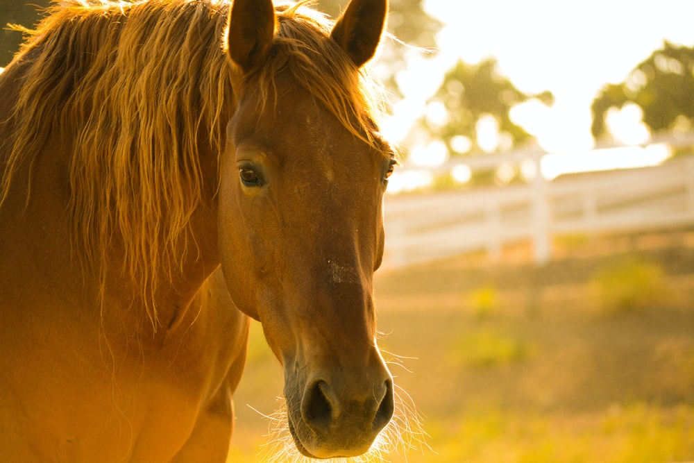 photo of brown horse during day time