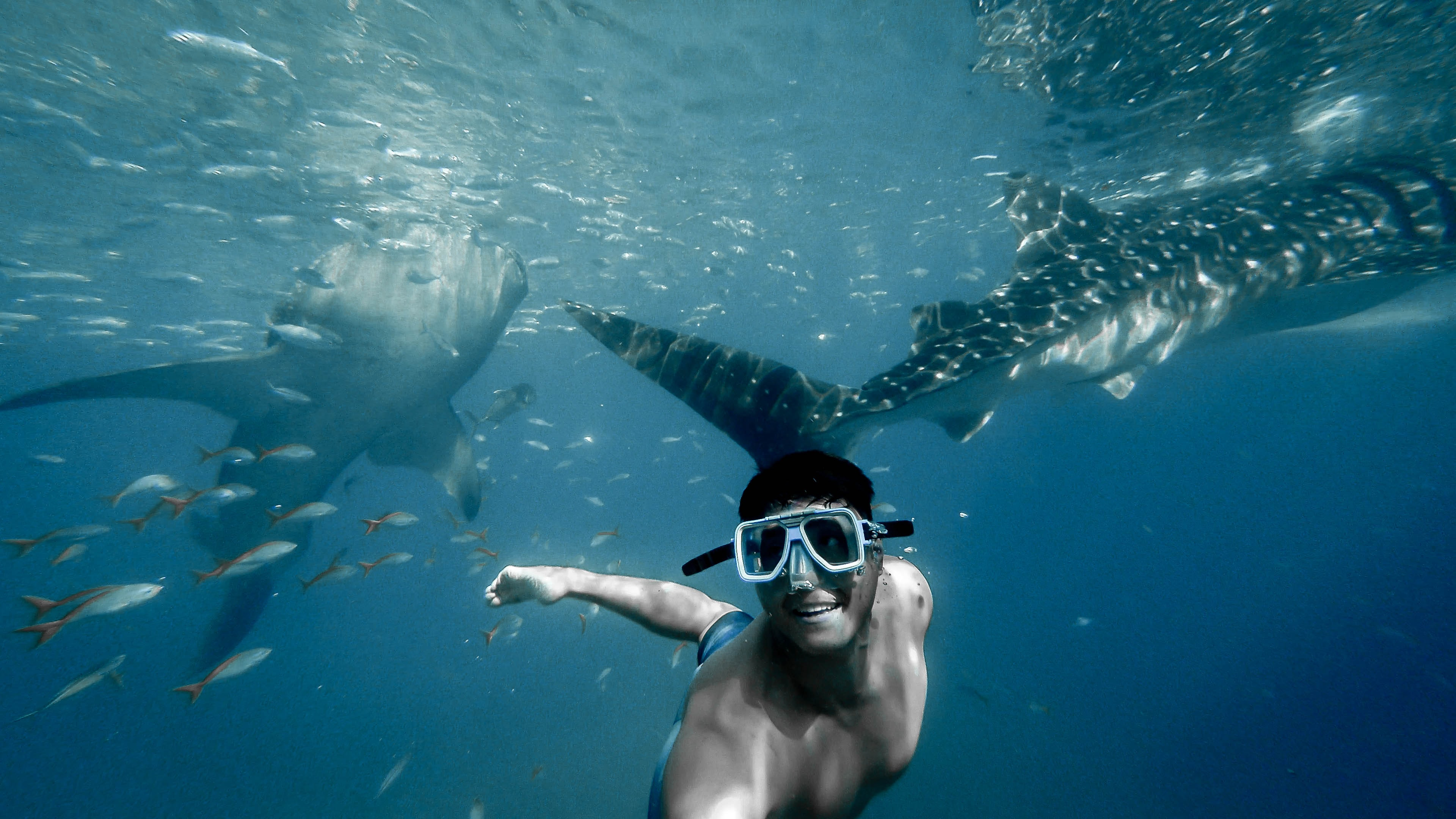 man swimming with whales