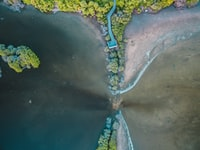 bird's-eye view of body of water and trees