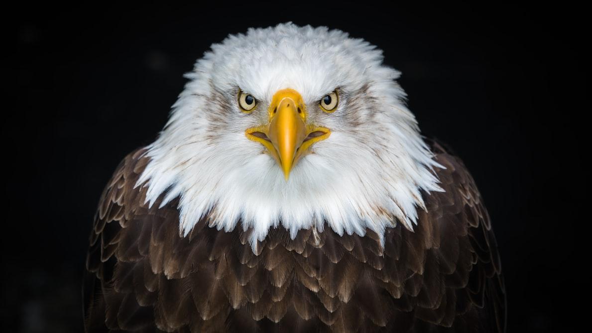 L'aigle représente assez souvent le symbole de la puissance.