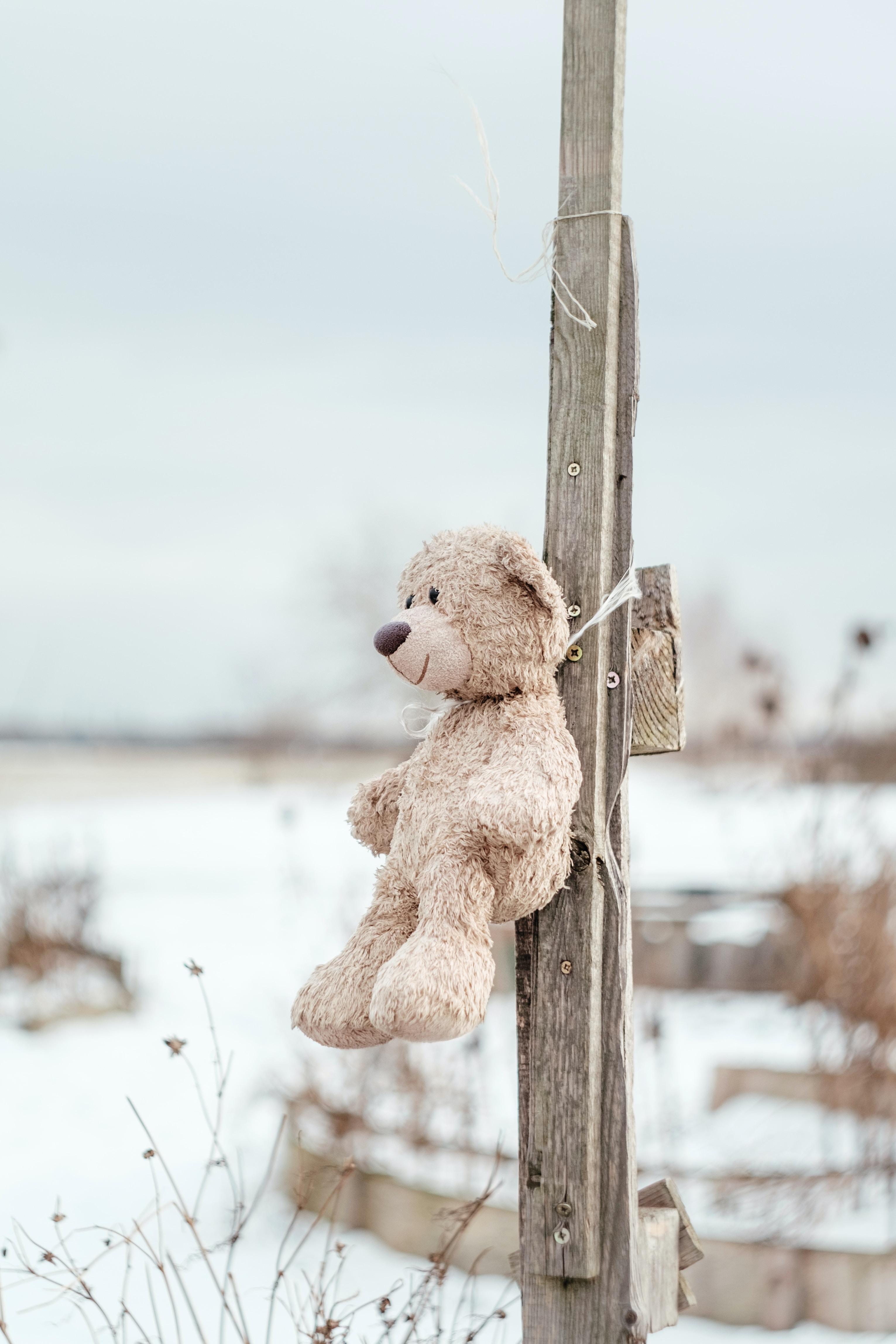 A stuffed bear tied against a wooden pole outside.