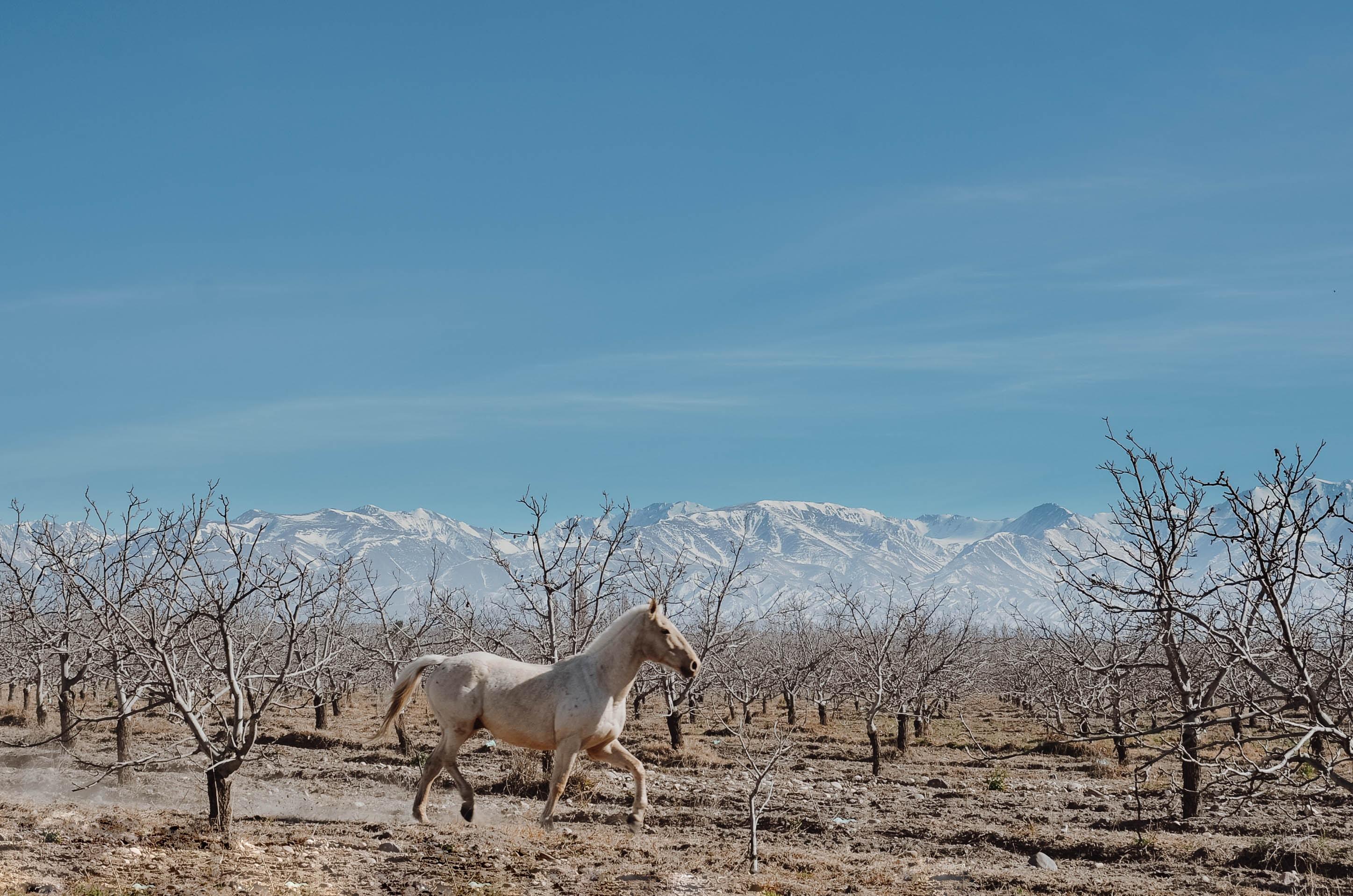 white stallion running on ground next to leafless trees