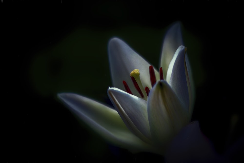 shallow focus photography of white flower