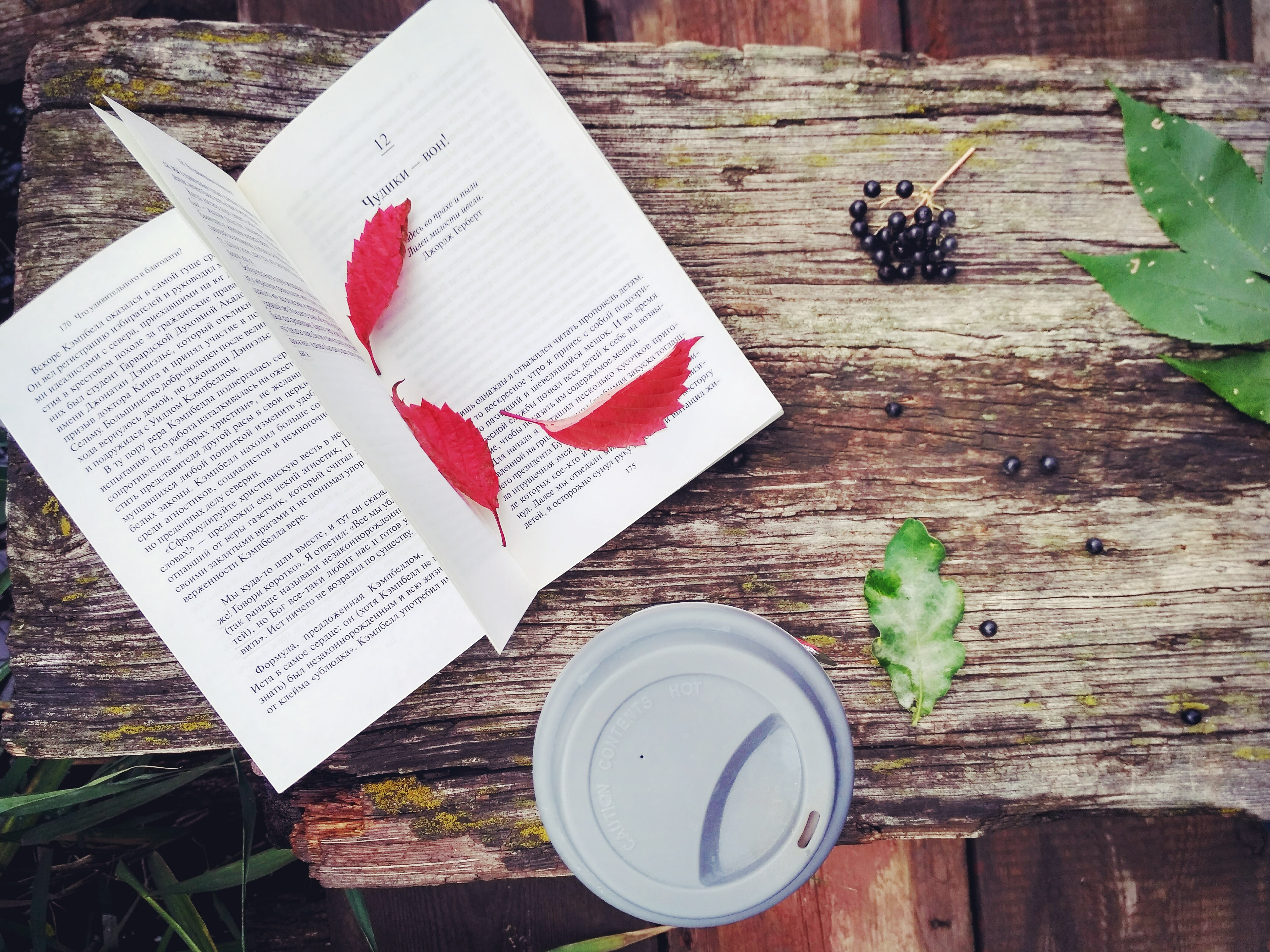 red leaves on opened book