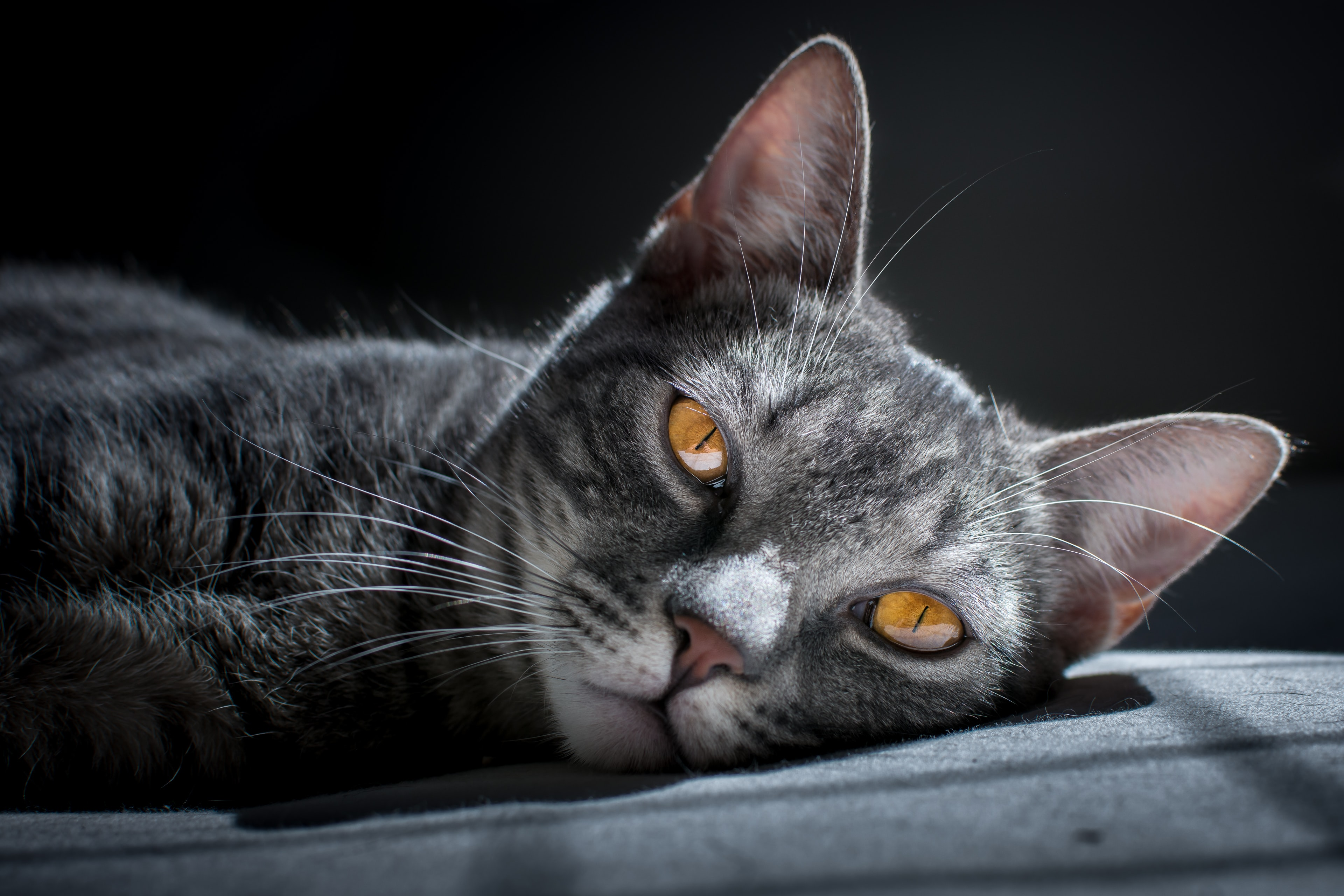 brown tabby cat laying on grey surface