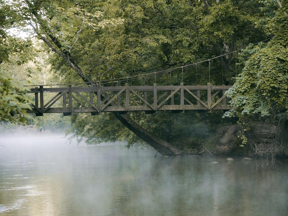 brown wooden bridge near lake