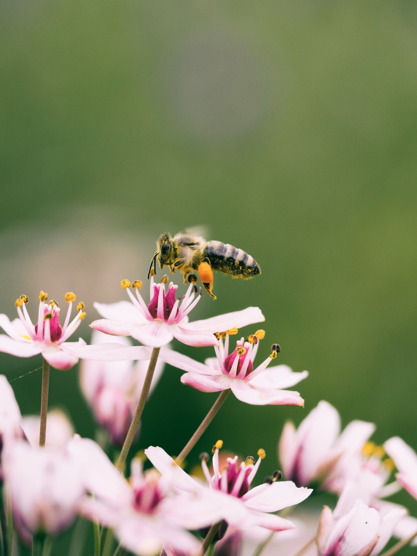 Hornet eating flower