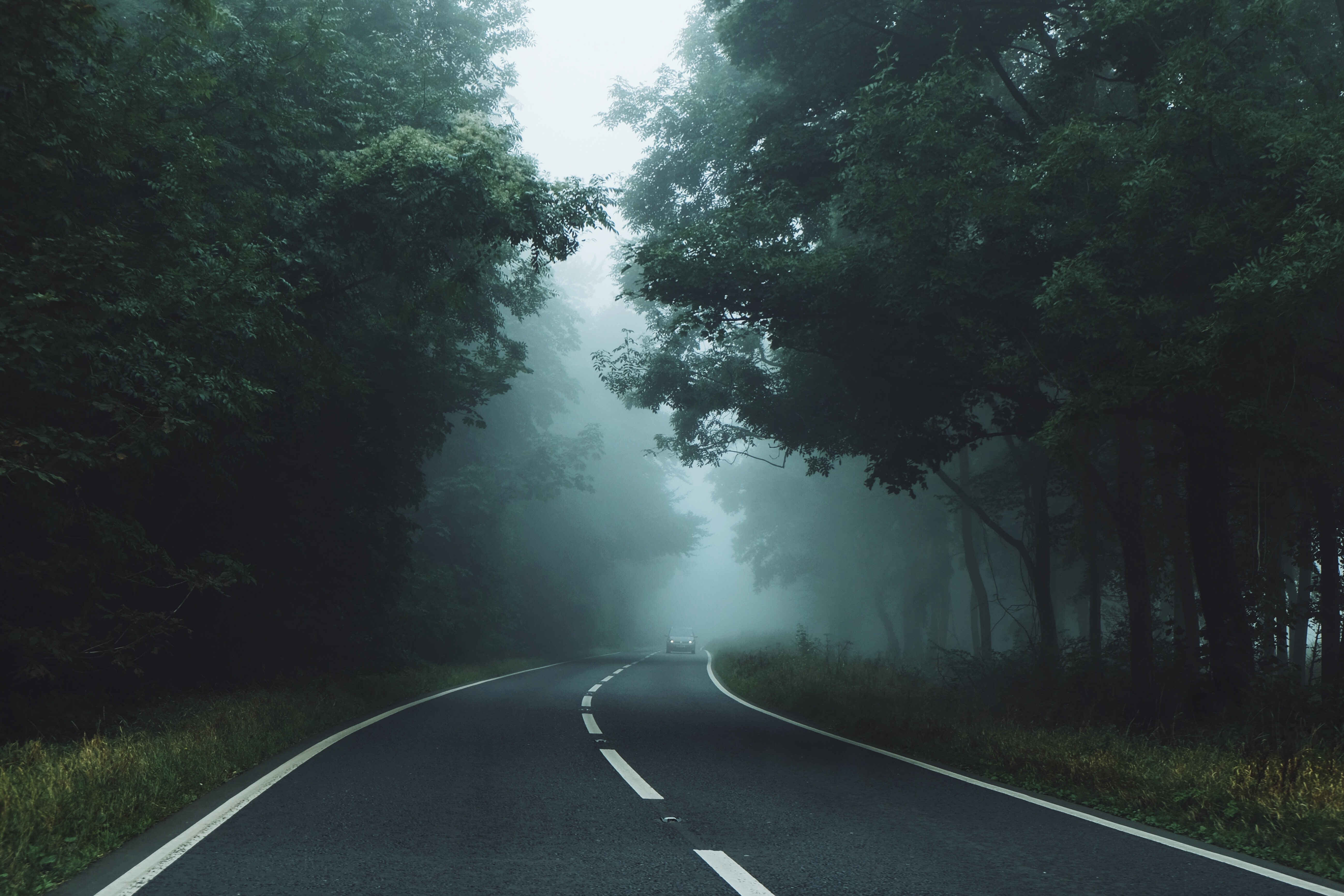 An empty road in a forest on a foggy day.
