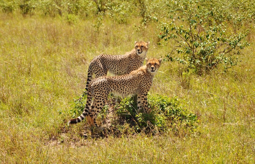 A wild couple