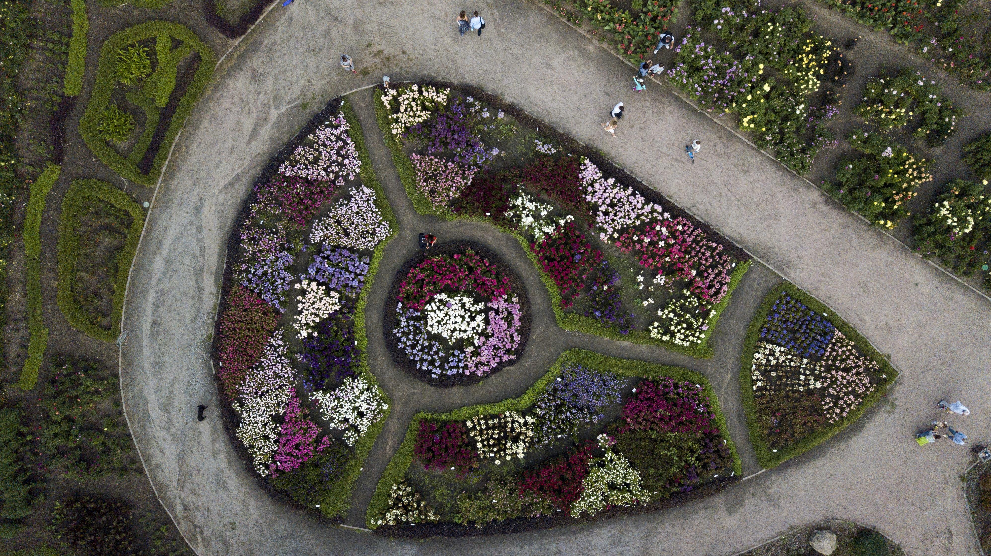 bird's eye view photography of flower field