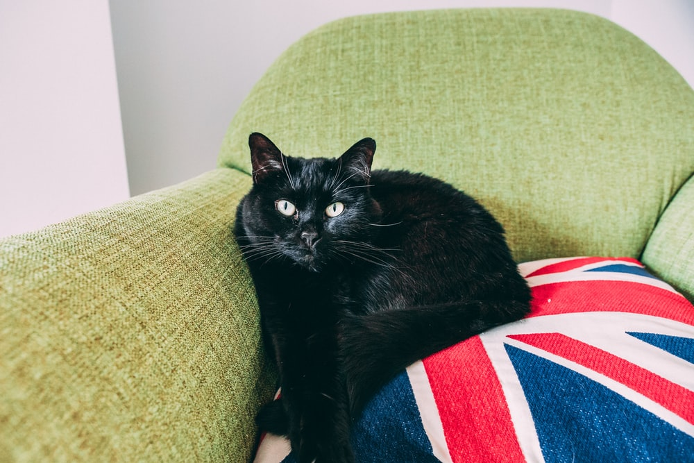black cat sitting on Union Jack throw pillow on green armchair
