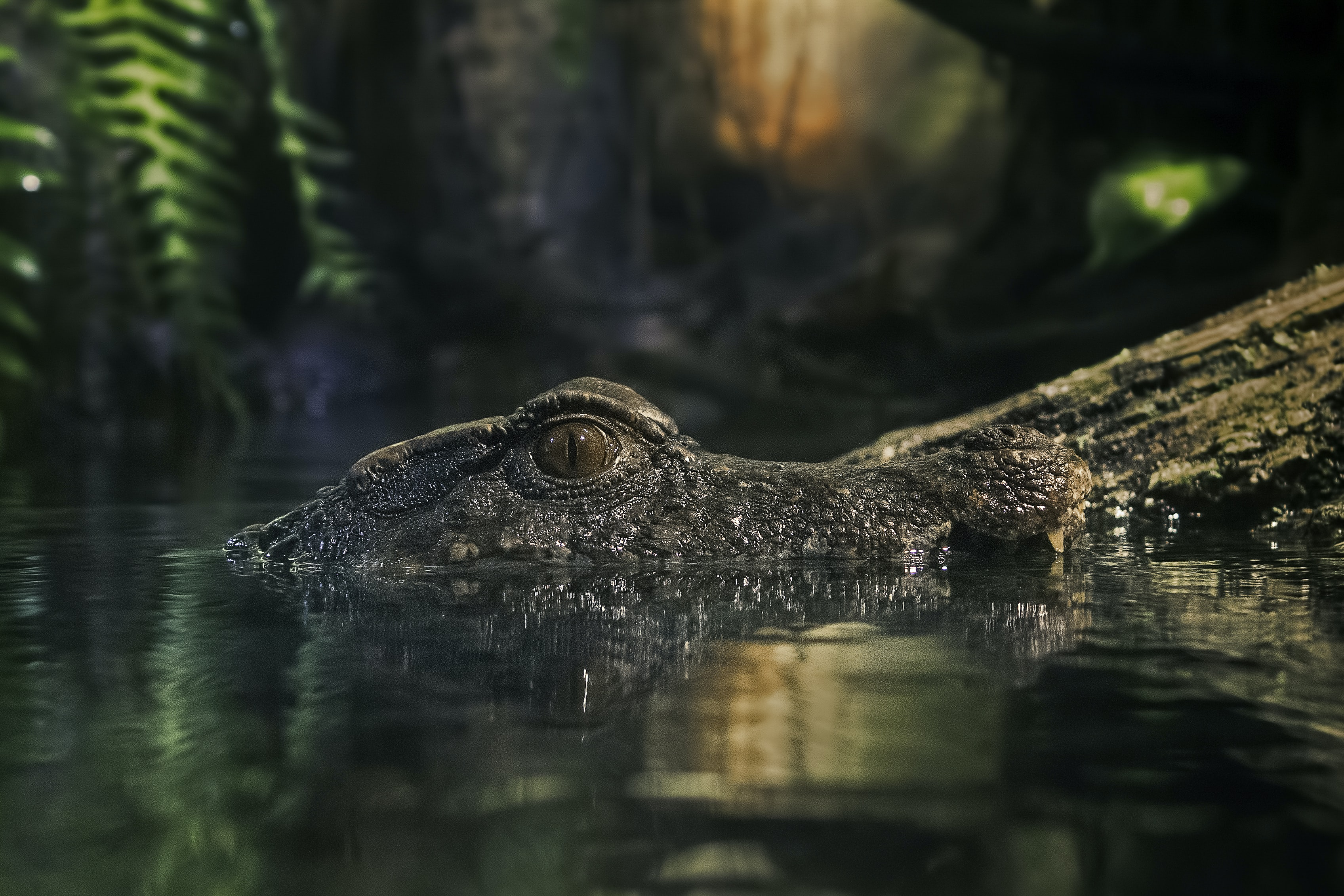 macro photography of crocodile on body of water