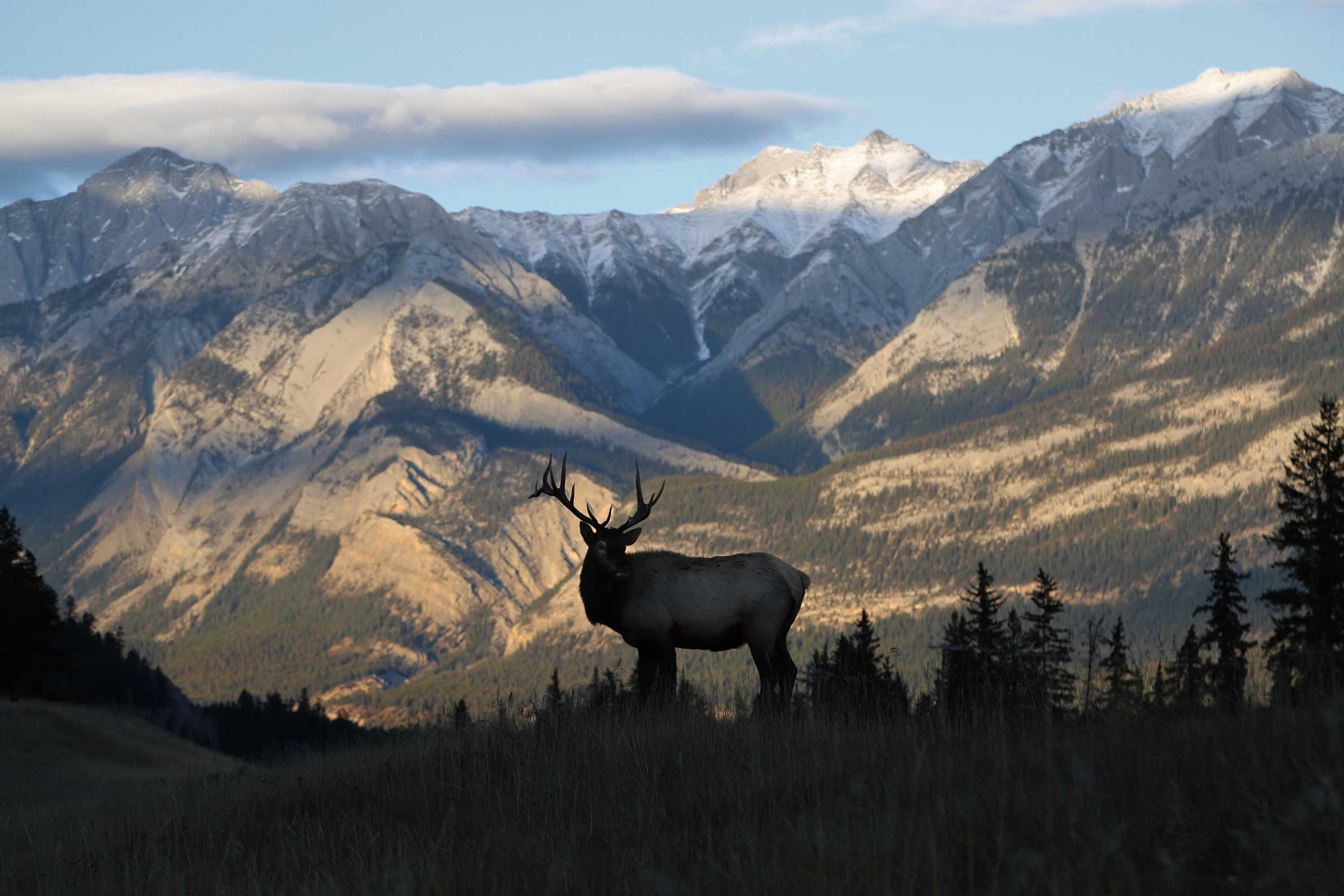 silhouette of deer and mountain background