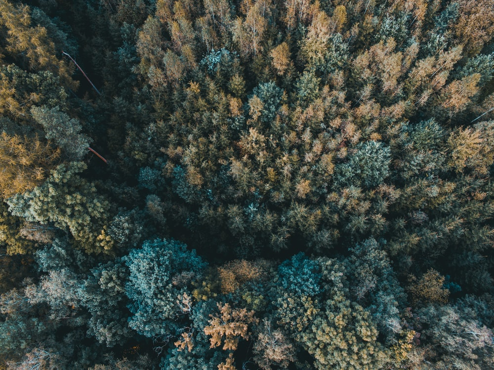high angle photography of green and brown trees
