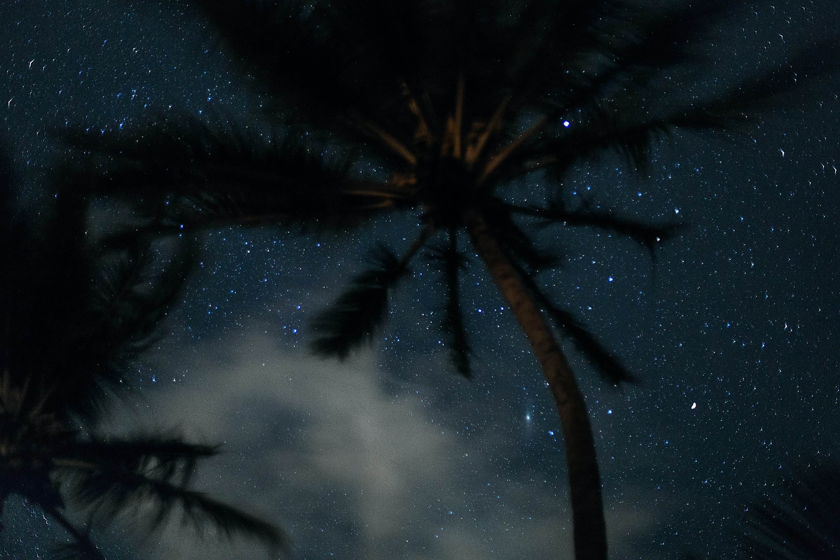 A palm tree under a starry night sky.