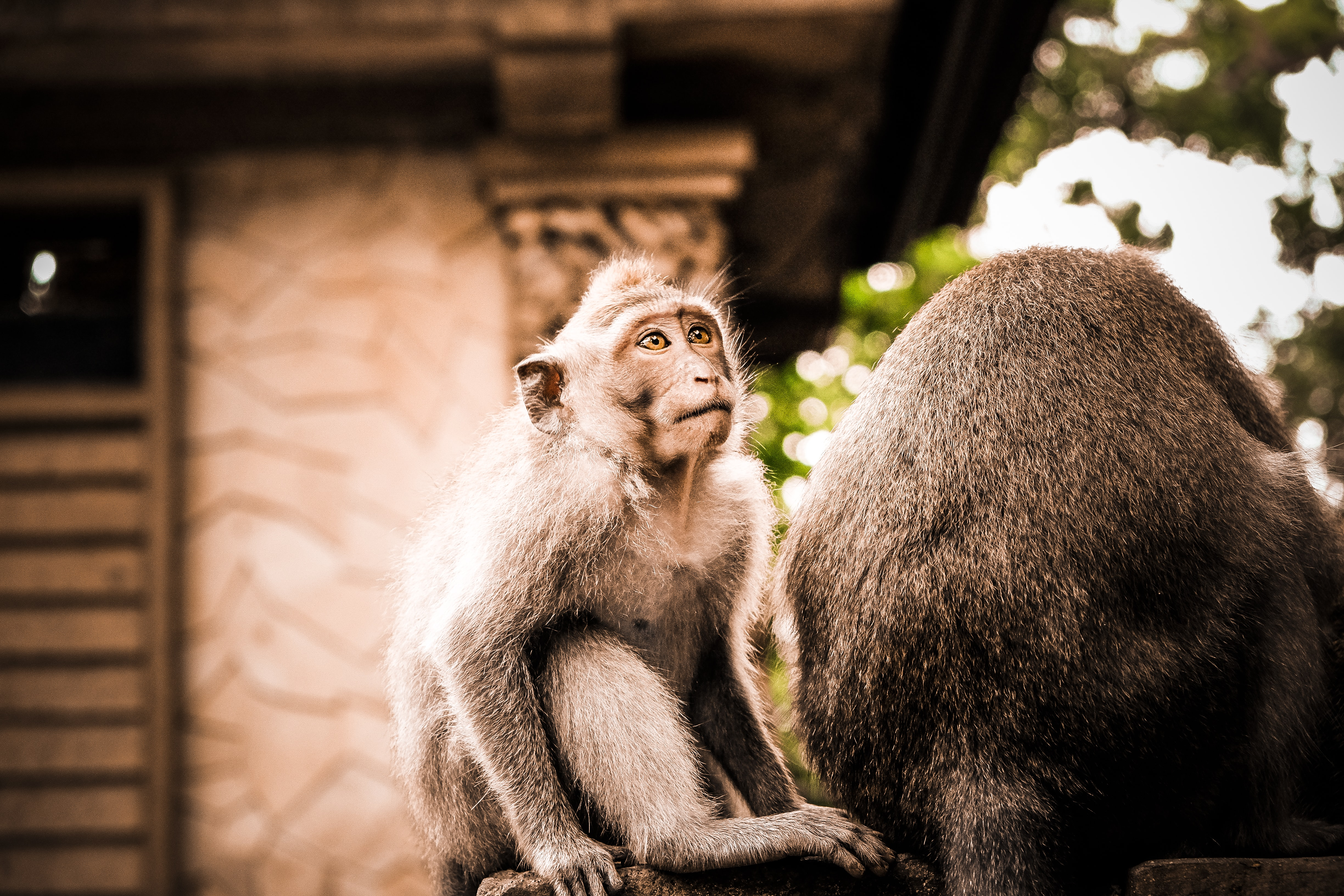 selective focus photography of black monkey