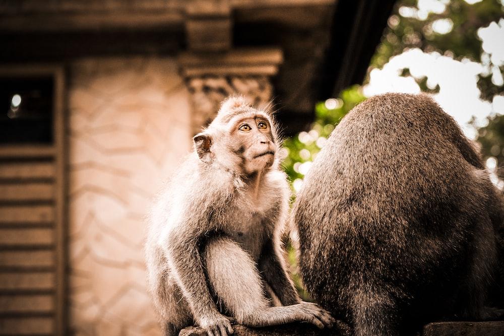 selective focus photography of black monkey