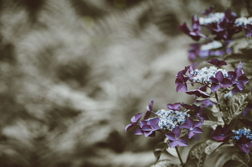 shallow focus photography of purple leafed plant