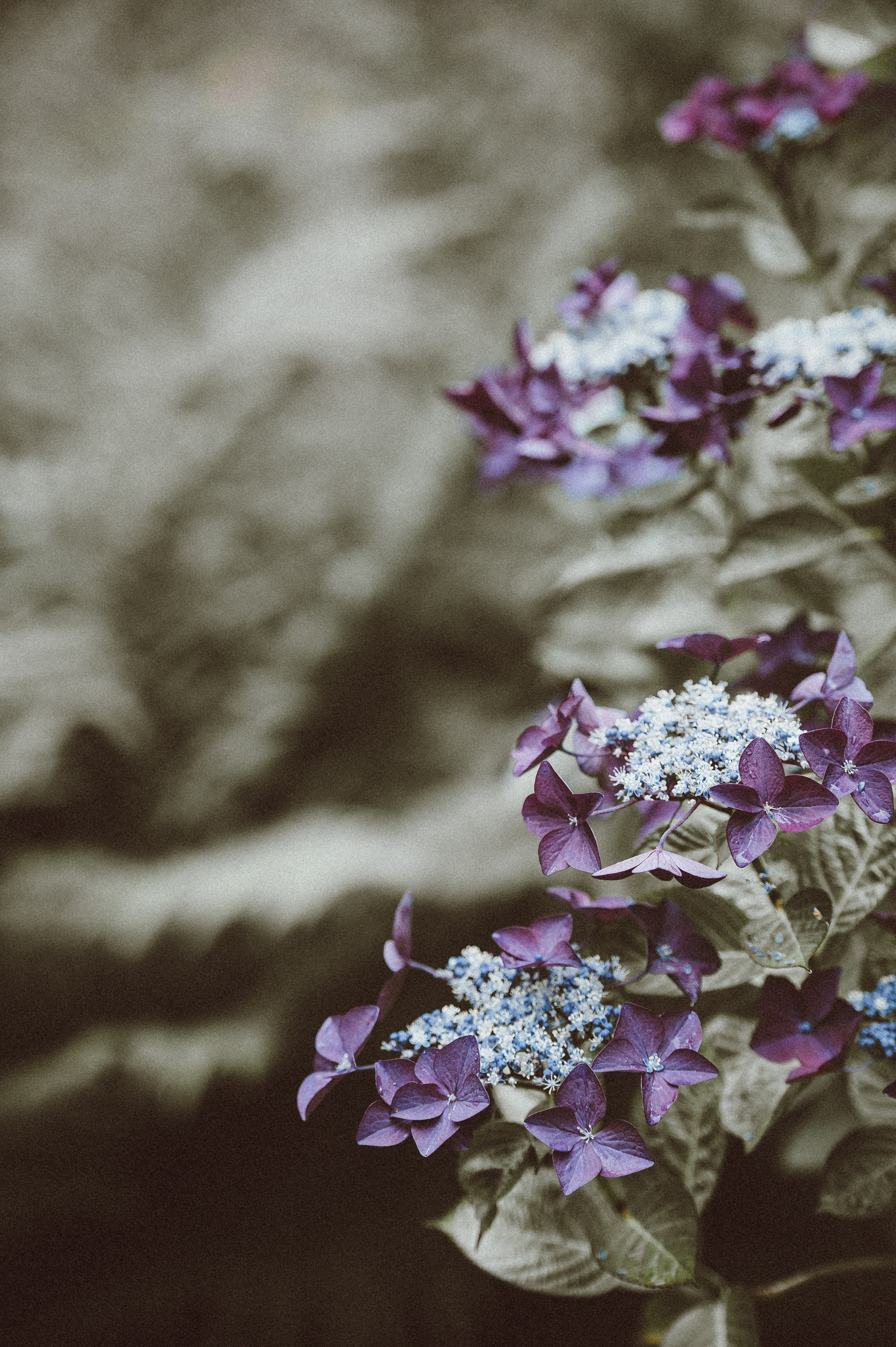 shallow focus photography of purple and white flowers