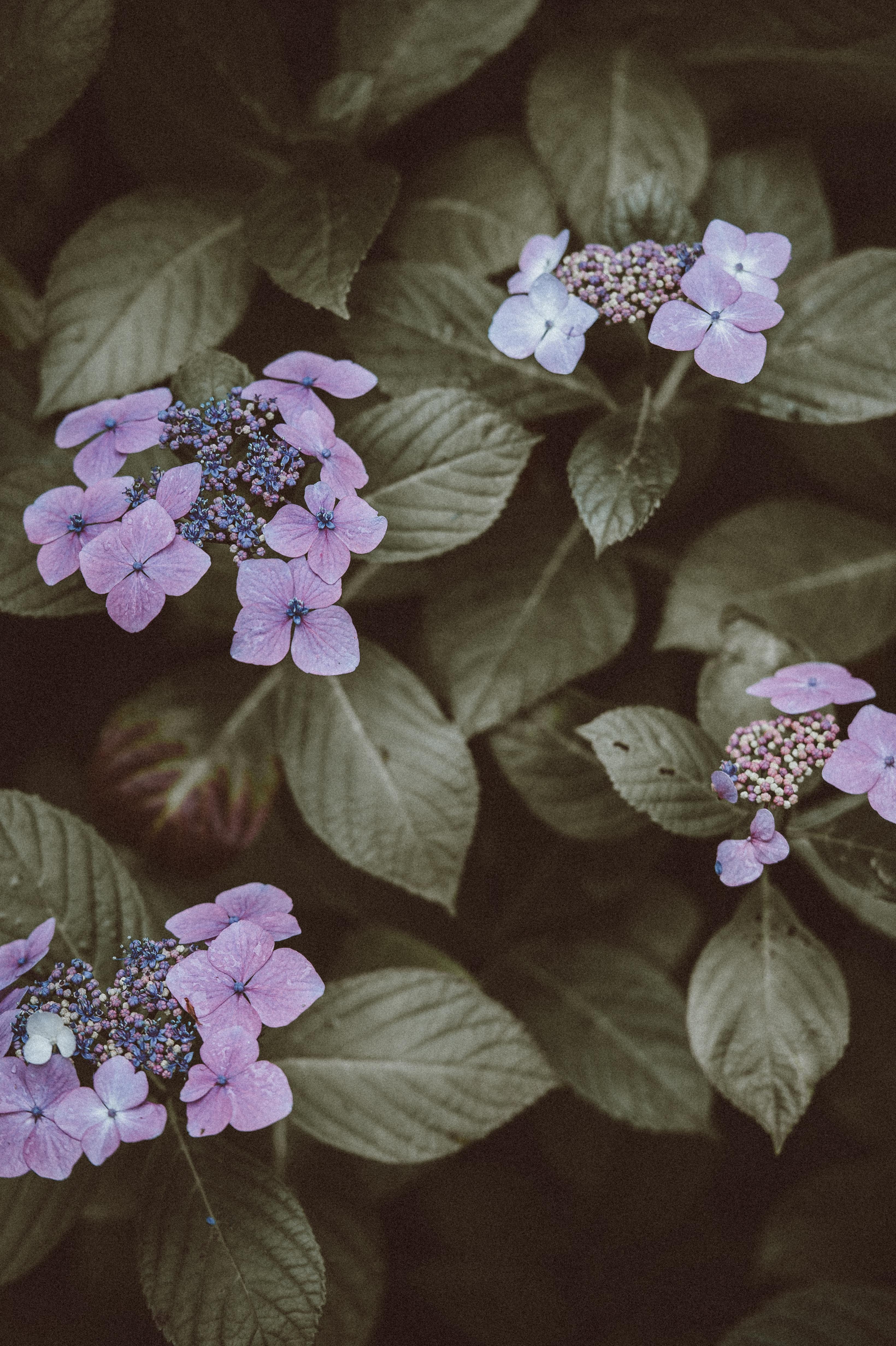 purple petaled flowers close-up photography