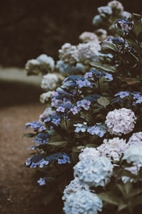 shallow focus photography of pink and blue flowers