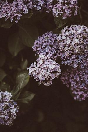 1638. Növények világa