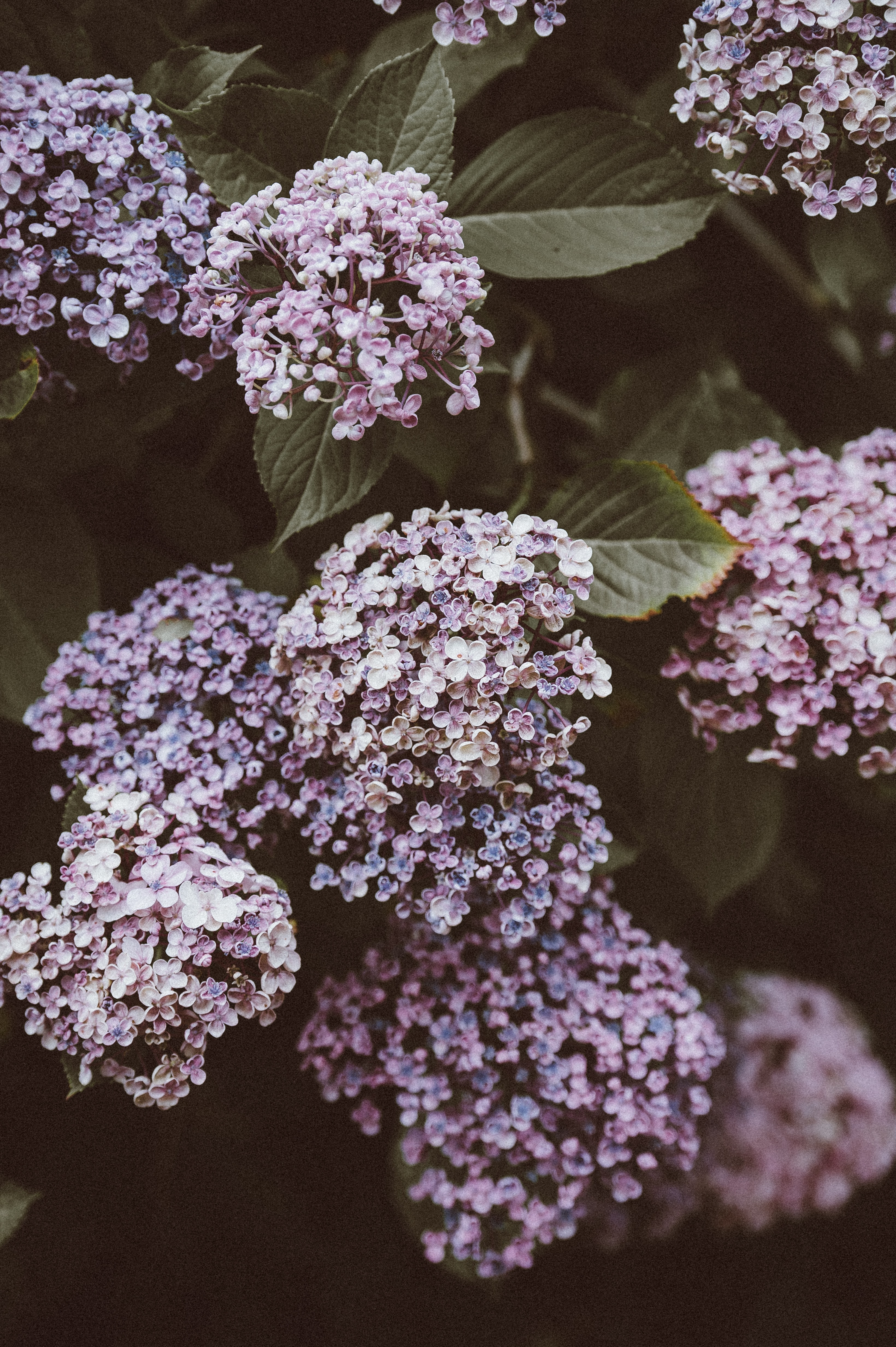shallow-focus photography of purple flowers