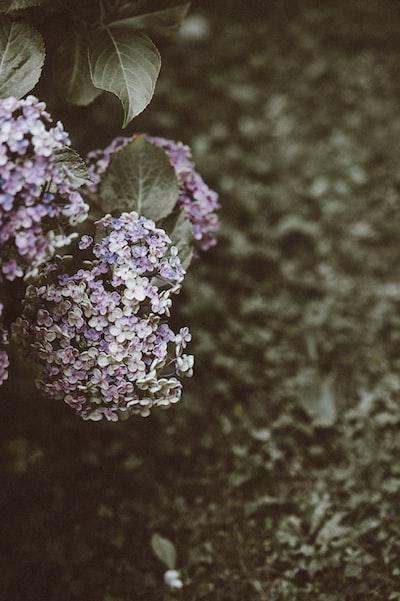 closeup photo of white and purple flowers