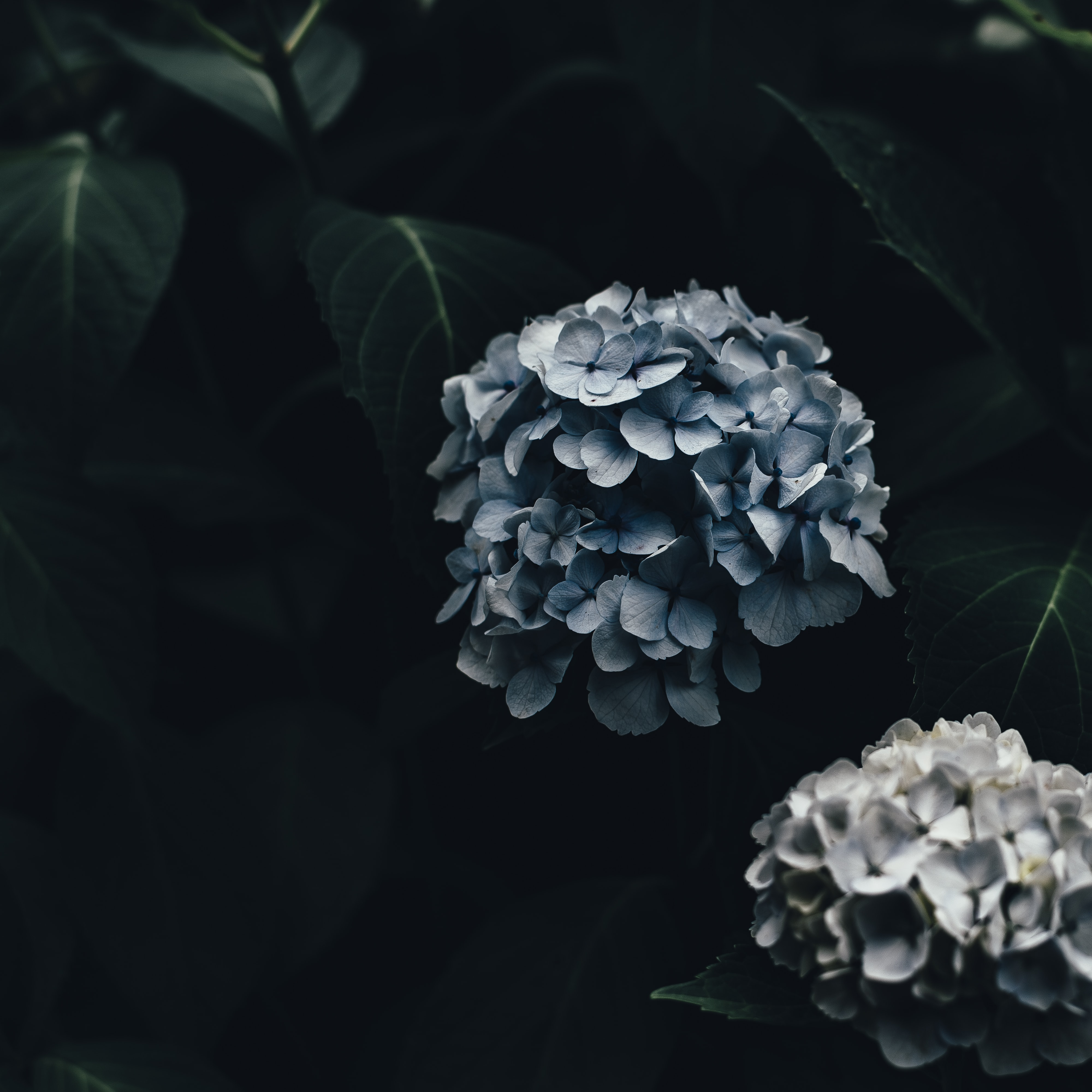 shallow focus photography blue flowers