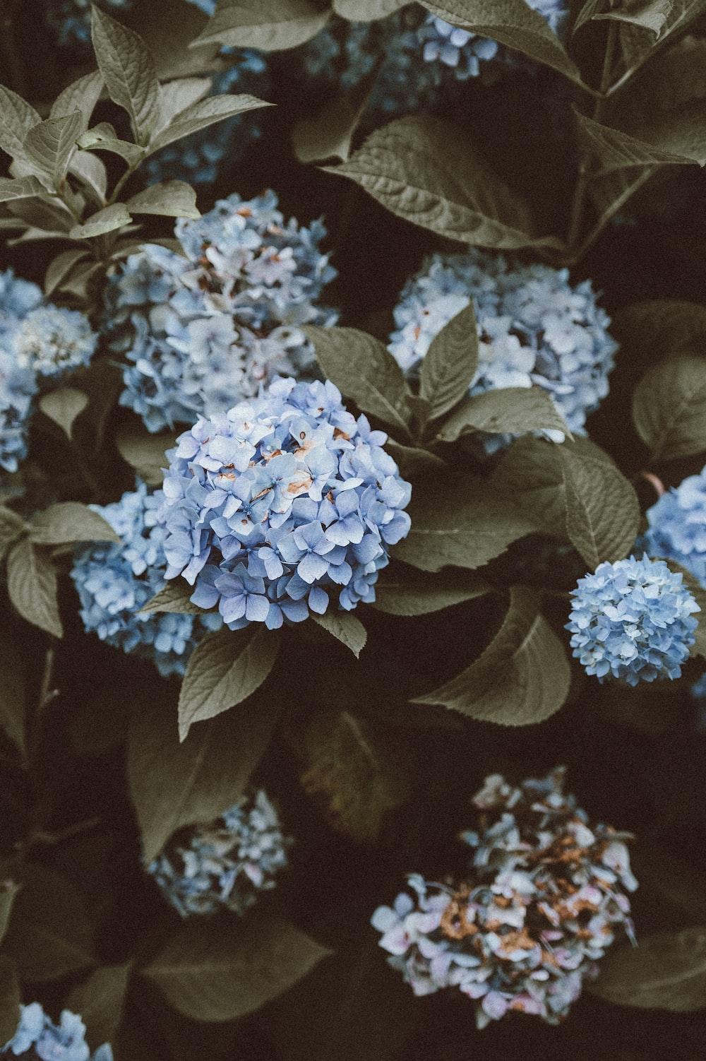 500 Blue Flower Pictures Hd Download Free Images On Unsplash