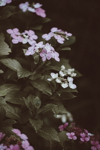purple and white flowers surrounded by leaves