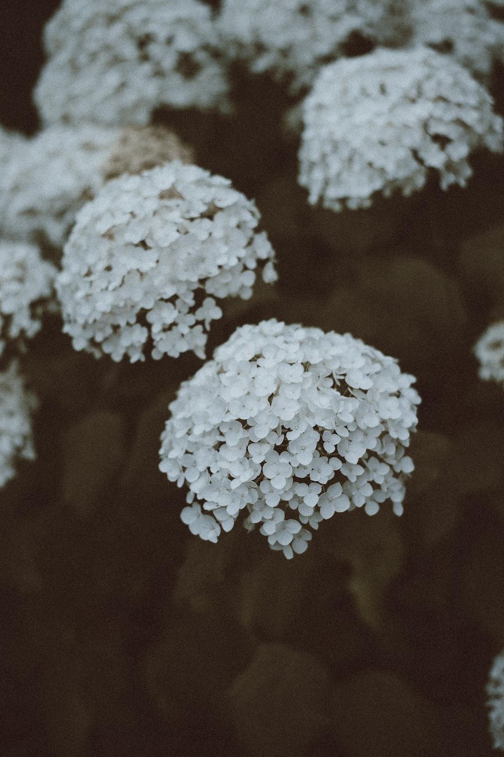 Flower Petals Plant And White Hd Photo By Annie Spratt