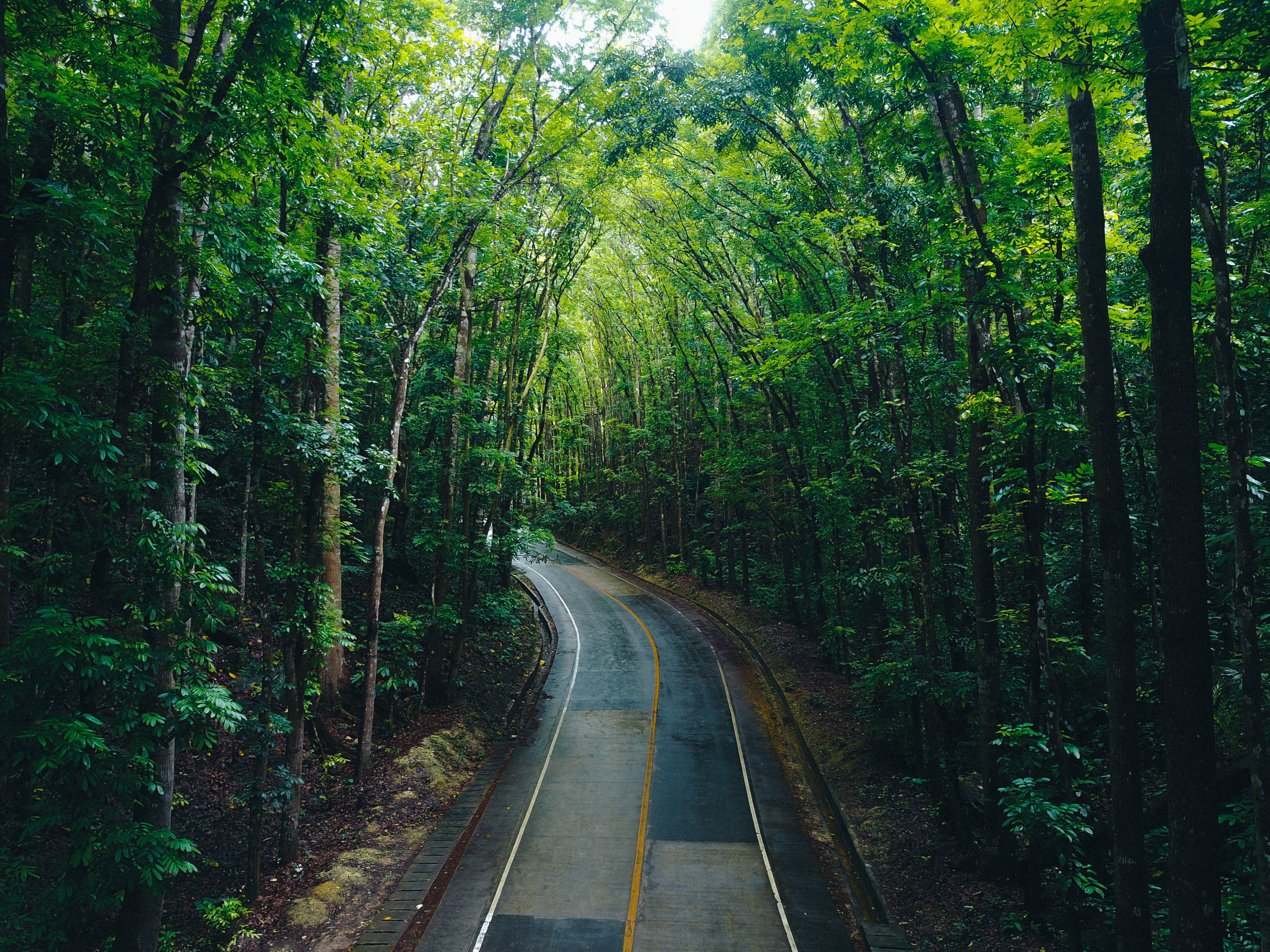curved road surrounded by trees