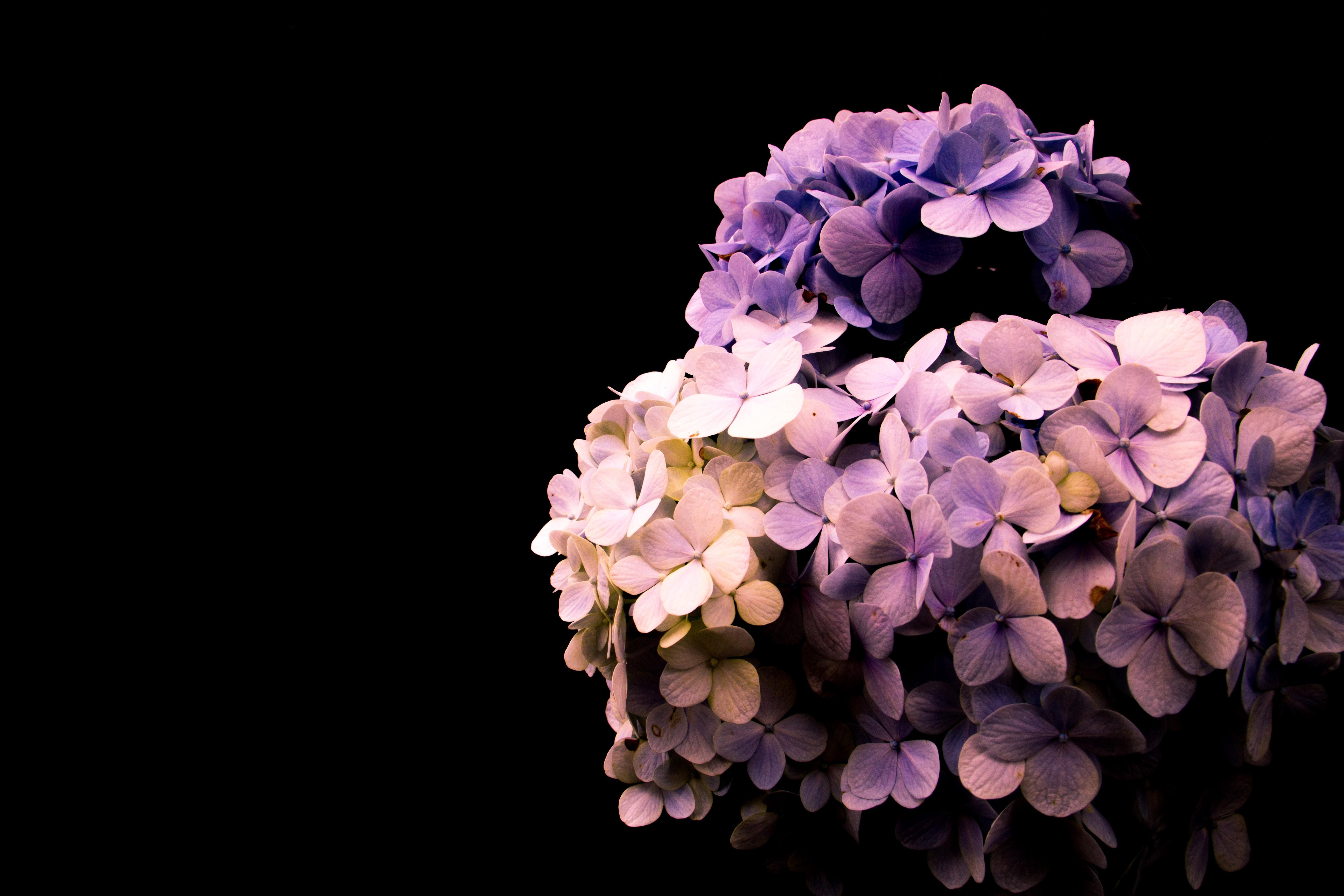 purple and pink flower buoquet