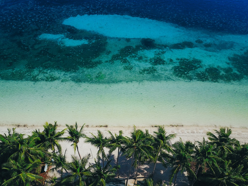 aerial view photography of palm trees on beach during daytime